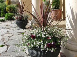 RMS-automedon_planters-container-garden-entry_s4x3_lg.jpg for blog